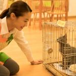 映画猫は抱くものロケ地・撮影場所(沢尻エリカ、吉沢亮目撃情報あり)